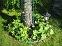 Bild 043 Stockrosor och Riddarsporrar vid Körsbärsträdet. 2008-05-08 Bild 043