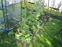 Bild 044 Uteplatsen. Växthusen skymtar. 2008-05-08 Bild 044