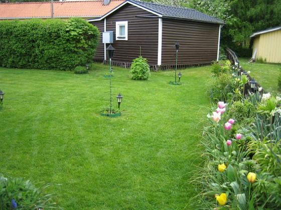 Tulpan &nbsp 2008-05-17 Bild 028 Granudden Färjestaden Öland