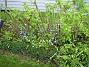Bild 044  2008-05-17 Bild 044