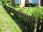 Allium  2008-06-01 Bild 003