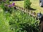 Allium  2008-06-01 Bild 010