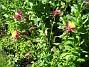 Akleja  2008-06-01 Bild 028