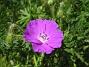 Blodnäva  2008-06-01 Bild 060