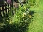 Iris  2008-06-07 Bild 011