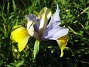 Iris  2008-06-07 Bild 015