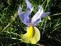 Iris  2008-06-07 Bild 017