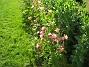 Akleja  2008-06-07 Bild 048