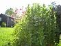 Akleja  2008-06-07 Bild 050