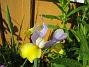 Iris  2008-06-07 Bild 104