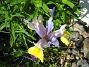 Irisar  2008-06-07 Bild 105
