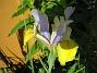 Iris  2008-06-07 Bild 107