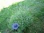 (2008-06-15 Bild 015)