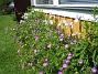 Blodnäva  2008-06-15 Bild 039