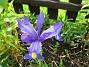 Irisar  2008-06-20 Bild 036