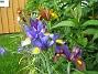 Irisar  2008-06-20 Bild 042