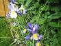 Irisar  2008-06-20 Bild 044