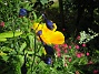 Bild 031  2008-07-01 Bild 031