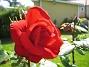Ros  2008-07-01 Bild 045