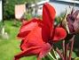 Ros  2008-07-01 Bild 047
