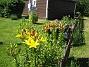 Liljor  2008-07-02 Bild 008