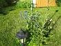 Bild 029 Vita och blå Riddarsporrar under en av mina kameror. 2008-07-04 Bild 029