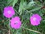 Blodnäva  2008-07-12 Bild 064