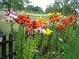 Lijor  2008-07-12 Bild 120