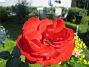 Ros  2008-07-24 Bild 015