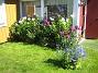 Höstflox i vinkeln  2008-07-24 Bild 041
