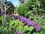 Fjärilsbuskar  2008-07-24 Bild 057