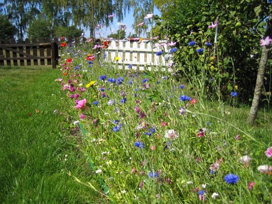 Sommarblommor Mitt försök att skapa en egen liten sommaräng.&nbsp 2008-07-28 Bild 013 Granudden Färjestaden Öland