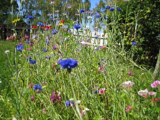 Sommarblommor Mitt försök att skapa en egen liten sommaräng.&nbsp 2008-07-28 Bild 014 Granudden Färjestaden Öland