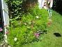 Rosenskära  2008-07-28 Bild 009