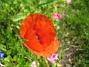 Vallmo  2008-07-28 Bild 023