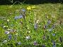 Sommarblommor  2008-07-28 Bild 042