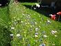 Sommarblommor  2008-07-28 Bild 043