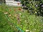 Sommarblommor  2008-07-28 Bild 048