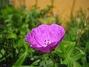 Blodnäva  2008-07-28 Bild 054