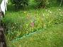 Sommarblommor  2008-08-16 Bild 042