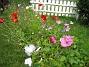 Sommarblommor  2008-08-16 Bild 046