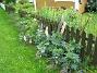 Utsidan staketet Här har jag en hel massa Lupiner. 2008-09-14 Bild 003