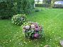 Hortensia  2008-09-28 Bild 038