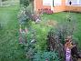 Granudden Lupiner i oktober - jodå, jag drev upp dem i april och de började blomma på hösten. Egentligen brukar de inte blomma alls första året. 2008-10-04 Bild 060