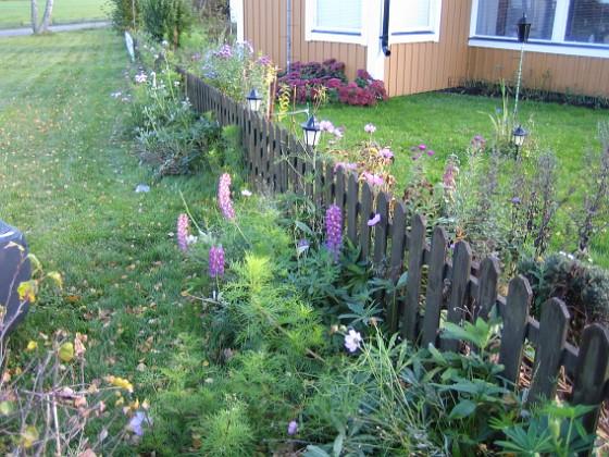 Granudden Utanför staketet växer det fortfarande Lupiner och Rosenskära.&nbsp 2008-10-19 002 Granudden Färjestaden Öland