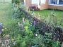 Utanför staketet växer det fortfarande Lupiner och Rosenskära. (2008-10-19 002)