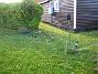Granudden Ja jag vet, gräset behöver klippas. Men det får jag göra till våren istället. Hoppas bara det inte blir för mycket mögel - beror förstås på hur mycket snö det ligger ovanpå, och hur länge... 2008-10-19 003