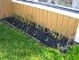 Vinkel Här har jag satt Tulpaner och Irisar. I framkant skymtar några små Blodnäva, som jag hoppas klarar vintern. Blodnäva är även bra som marktäckare, dvs för att se till att det inte blir för mycket ogräs under sommaren. 2008-10-19 026