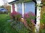 Altanen Luktaster vid Altanen. Alla dessa blommor kommer från tre plantor bara. 2008-10-19 043