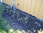 Norra Gaveln Här har jag precis rensat bort Kärleksört. Till våren kommer här Påskliljor och Iris. 2008-12-21 025